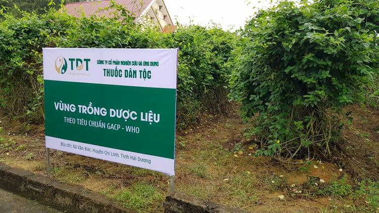 Vườn dược liệu Đông y của Trung tâm Thuốc dân tộc
