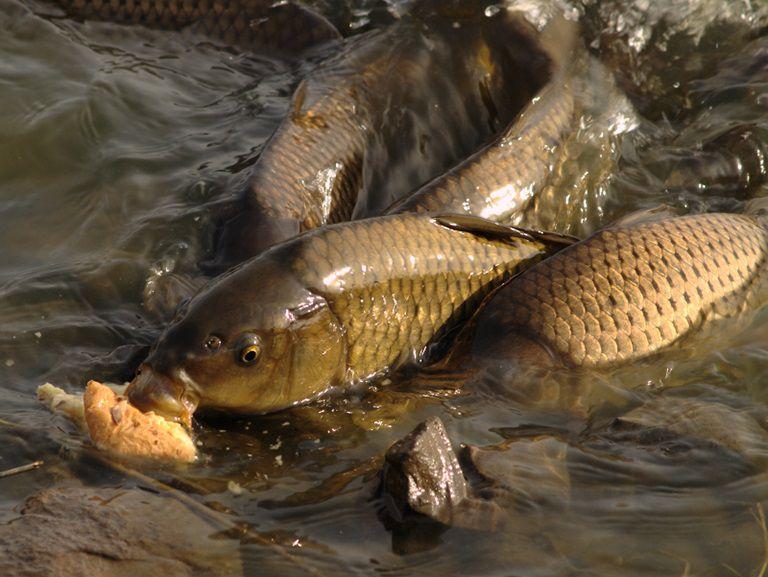 Chất béo từ cá tự nhiên rất tốt cho niêm mạc đường ruột